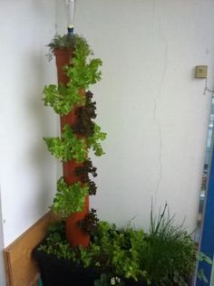 Der Salatbaum oder Salatturm