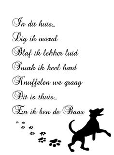 speciaal voor Frakke en Jempie Dachshund, Learn Dutch, Dog Texts, Live Life Love, Beautiful Lyrics, Cute Chihuahua, Lab Puppies, Feeling Sad, Some Quotes
