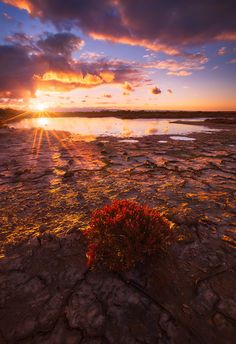 Parched by Dylan Gehlken on 500px