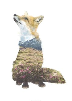 Faunascapes Fox Art Print by WhatWeDo. Printed on 300g Cyclus Offset which is an uncoated, natural white recycled offset paper that is eco and FSC