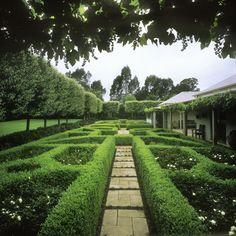 boxwood hedge, hornbeam