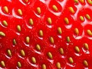 strawberry seeds. How to save from the fruit is also listed on this page.
