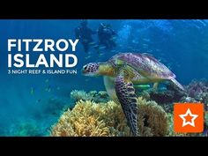 The Fitzroy Island Website. View all Resort & Day Tour options. Fitzroy Island is only 45 minutes from Cairns Australia. Giant Sea Turtle, Sea Turtles, Photos Sous-marines, Largest Sea Turtle, Beautiful Tropical Fish, Leatherback Turtle, Underwater Photographer, Marine Aquarium, Wild Creatures