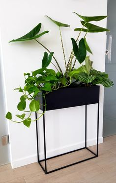 New part of my urban jungle garden indoor small spaces living rooms Urban jungle Indoor Garden, Indoor Plants, Home And Garden, Rooftop Garden, Balcony Garden, House Plants Decor, Plant Decor, Plantas Indoor, Decoration Plante