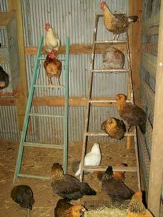 Newest Diy Chicken Coop Plans Design Ideas For Your Backyard - Today chicken coops are available in various designs. You can either get a pre built coop or you can even build it yourself. Building a DIY chicken co. Chicken Roost, Chicken Barn, Easy Chicken Coop, Chicken Coup, Portable Chicken Coop, Chicken Ladder, Inside Chicken Coop, Chicken Houses, Diy Chicken Toys