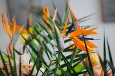 La naturaleza es sabia...mira que linda combinación de verde y naranja...para un interior se puede aplicar a maravilla...son dos #colores contrastantes..
