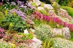 Get some great sloping garden design ideas to use in your own garden. Do you live with a slope? make steps? flatten it out into levels? We help you to decide. Sloped Backyard, Sloped Garden, Garden Projects, Plants, Swimming Pond, Outdoor, Backyard Landscaping, Landscape, Backyard