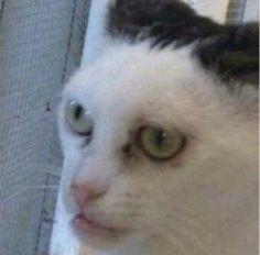 Funny Cat Faces, Meme Faces, Cute Funny Animals, Cute Cats, Funny Cats, Stupid Memes, Dankest Memes, Funny Memes, Hilarious