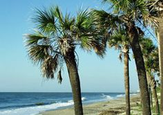 edisto island, sc.  the best beach in the south ;)