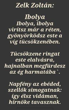 Zelk Zoltán: Ibolya