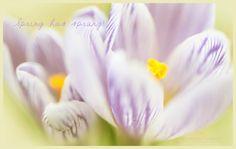 Spring Postcards Flowers Easter Postcard Nature by FolKandFarM