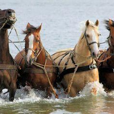Paarden reddingsboot Hollum (Ameland)