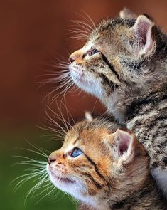 Adorable cute and beautiful cats