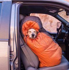This Dog's Life