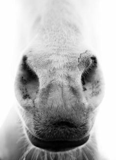 One of my favorite #horse photos ever!