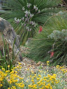 Pebble mulch creates a healthy environment for the Xanthorrhoea (Grass Tree), Anigozanthos sp. (Kangaroo Paw) and Chrysocephalum apiculatum. Photo: Heather Miles
