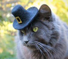 Pilgrim Cat Hat  Felt Pet Hat  Thanksgiving by ToScarboroughFair, $27.00