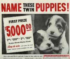 Name These Twin Puppies!