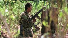 Colombia's Farc begins an indefinite, unilateral ceasefire, hours after the army said that the left-wing rebels had killed five soldiers.