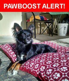 Please spread the word! Boots was last seen in Daly City, CA 94015.    Nearest Address: Near del Prado Dr & Mariposa Ave