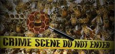 #EPA Knew #Pesticides Were, Killing #Honeybees in the 1970s But Punished Those Who Spoke Out