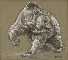 Grizzly Bear Angry Forest Animals