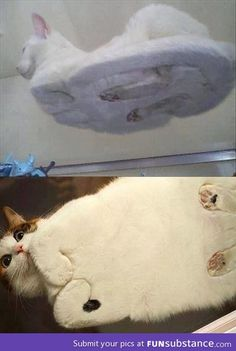 Cats from underneath a table