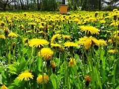 Beehive | Mesindus | Ingo Valgma | Flickr Beehive, Plants, Plant, Planets, Bee Skep