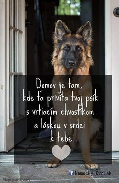 Story Quotes, Belgian Malinois, True Words, True Stories, Dachshund, Cute Dogs, Bff, Haha, Adoption