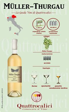 All Muller-Thurgau wines from Italy listed on Quattrocalici. Sweet Champagne Brands, Wine Party Appetizers, Pinot Noir Wine, Wine Searcher, Wine Vineyards, Organic Wine, Wine Sale, Wine Guide, Wine Cocktails