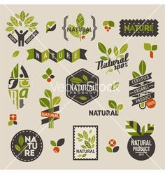 Illustration about Nature-themed labels and badges with green leaves – set of vector design elements. Illustration of packaging, human, product - 29600791 Label Design, Packaging Design, Branding Design, Logo Design, Vector Verde, Vector Design, Web Design, Design Ideas, Frame Floral