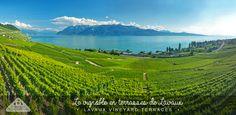 Lavaux terraced vineyards, Switzerland. Vignoble en terrasses, Lavaux, Suisse.