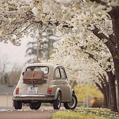 super ideas for cute cars vintage fiat 500 Fiat Cinquecento, Fiat 500c, Cars Vintage, Automobile, Fiat Cars, Cute Cars, Small Cars, Old Cars, Spring Break