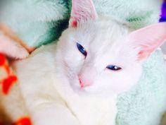 cat 2014年02月 : ねこごち