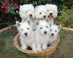 This is a basket full of energy and fun!!