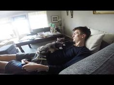 Tastefully Offensive: Overly Affectionate Cat Won't Let Her Human Play Video Games