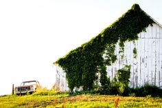 Barn covered in vines