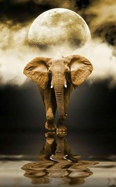 Reflection # Mirroring # Mirror # Spirit Animal # Animal Spirit # Spirit Guide # Obstacle Breaker # Elefant # Elefantastic # Ganesh # Ganesha # Jahnesh # Jahnesha # Jah We Elephant Love, Elephant Art, African Elephant, African Animals, Elephant Poster, Tattoo Elephant, Elephant Pictures, Elephants Photos, Animal Pictures
