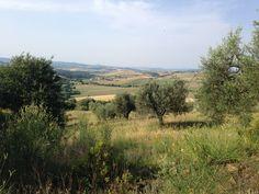L'oliveto panoramico