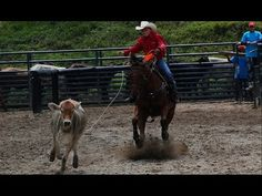 Características de la Vaquería Americana - TvAgro por Juan Gonzalo Angel