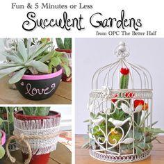 Three Easy Succulent Garden Ideas
