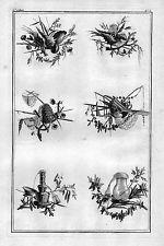 1770 - Ornament Garten Gärtnerei Blumen Floristik Kupferstich flowers Angelsport