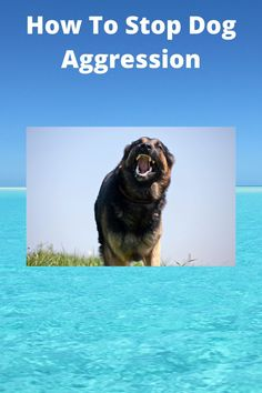 Discover how to easily stop your dog or puppy from being aggressive. #dog aggression #dog training #puppy training tips Online Dog Training, Dog Training Tips, Aggressive Dog, Puppies, Dogs, Animals, Cubs, Animales, Animaux