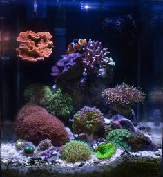 that can't be very many gallons. Saltwater Aquarium Setup, Saltwater Tank, Reef Aquarium, Reef Tanks, Fish Tanks, Marine Tank, Fish Fish, Shower Floor, Salt And Water