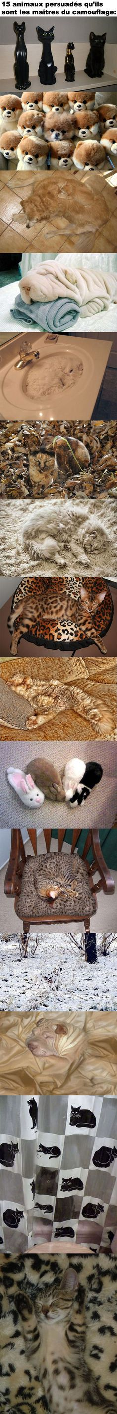 15 Cute animals that can camouflage like that Cute Funny Animals, Funny Cute, Cute Cats, Funny Dogs, Funny Memes, Crazy Cat Lady, Crazy Cats, Animals And Pets, Baby Animals