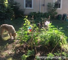 10 Ways to Sow Revolution in Your Back Yard