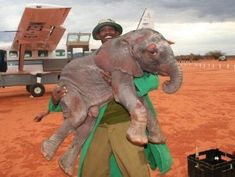 baby elephant getting help at David Sheldrick Wildlife fund. Well worth your dollars to help these little guys!