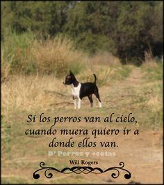 Frase de #Perros  #Chihuahua