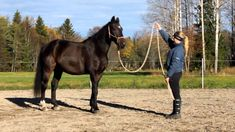 Parelli 7 games - Natural horsemanship