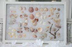 Cool Sea Shell Specimen Box...Wall Decor